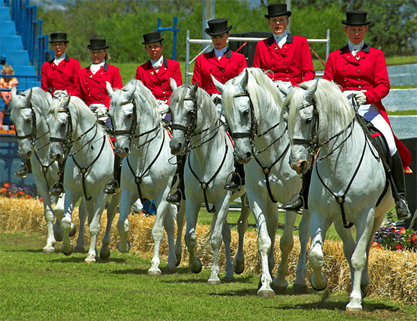 Lipizzaners Sunday Events